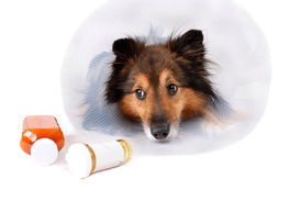 Pet needs medicine