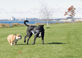 Dog park infections medications
