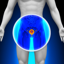 Bladder highlighted