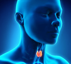 Human thyroid 3d rendering