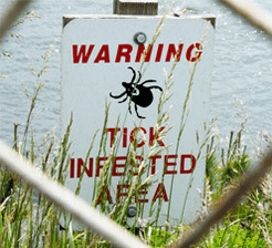 Tick infested area lyme disease