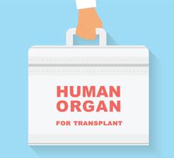 Human_organ_for_transplant