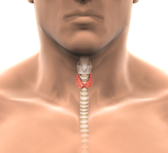 Thyroid concept