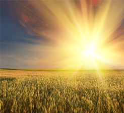 Hot sun in field
