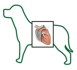 Dog with heartworms