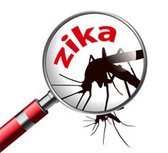 Examining zika virus concept