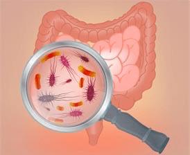 Intestinal bacteria concept