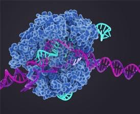 Crispr cas 9 biosciences.lbl.gov