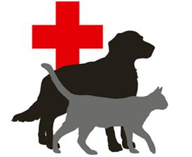 Pet medicine concept