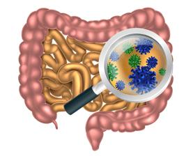 Gut bacteria concept